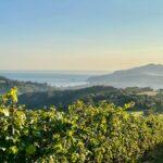 Vistas desde nuestros viñedos
